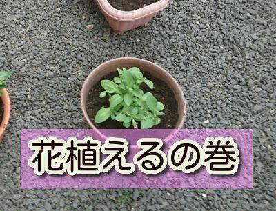 お花を植えてみました。ちゃんと育つかなー。。。